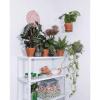 plantwire sort_planteophaeng