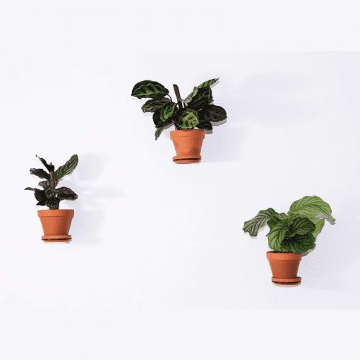 plantwire sort_plantholder_plantophaeng_dansk design